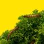 Tradicionalni deveti 'Ekstrakt z bregov' ovaj petak na Medvednici