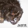 Objavljen novi album Kali Fat Duba 'Životinjska karma'